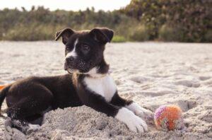 Hund auf Sylt am Strand